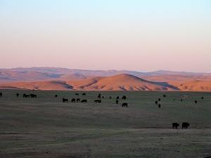 Steppe Mongolie