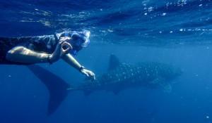 Avec un requin baleine