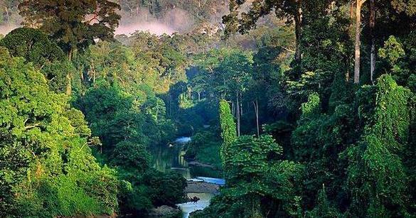 stage survie amazonie