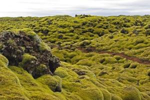 islande champs lave mousse