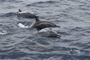 Activités nautique aux Maldives