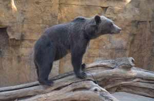Ours-zoo-de-Barcelone