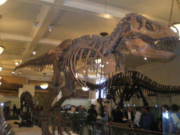 Musée d'Histoire naturelle de New York City
